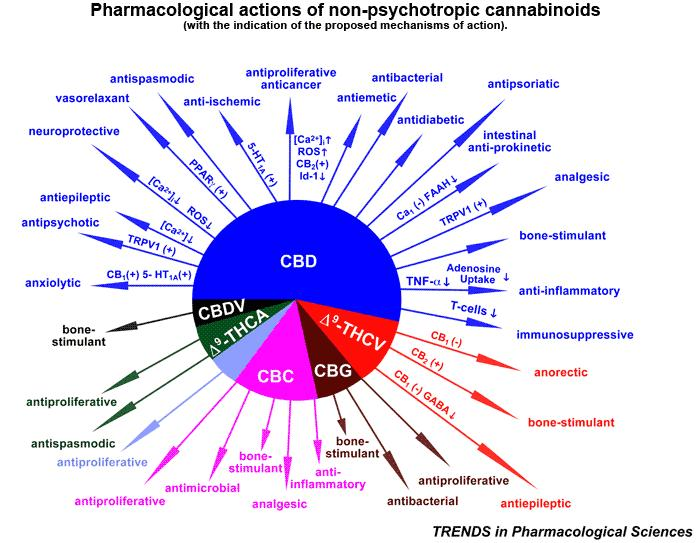 Piechart - Cannabis Oil