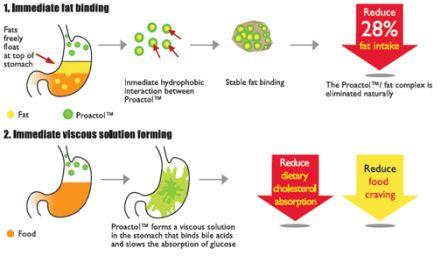 How Proactol Works