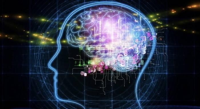 brain values information
