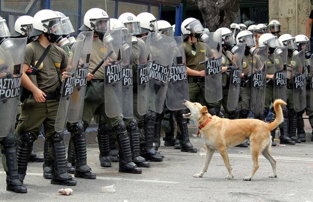 Image result for riot dog