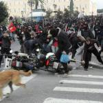08-The Story of Loukanikos and Other Greek Riot Dogs