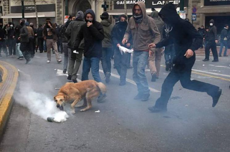 13-The Story of Loukanikos and Other Greek Riot Dogs