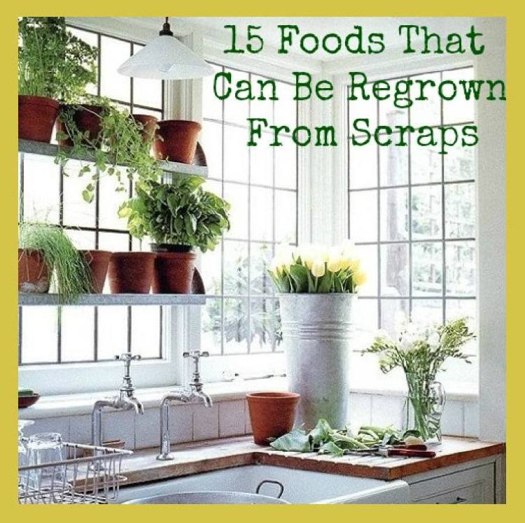 Foods Regrown From Scraps
