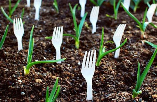 Keep pests and animals away with plastic forks