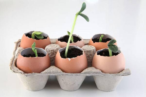 Raise your seedling from eggshells