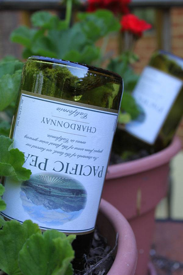 Use wine bottles to irrigate your plants