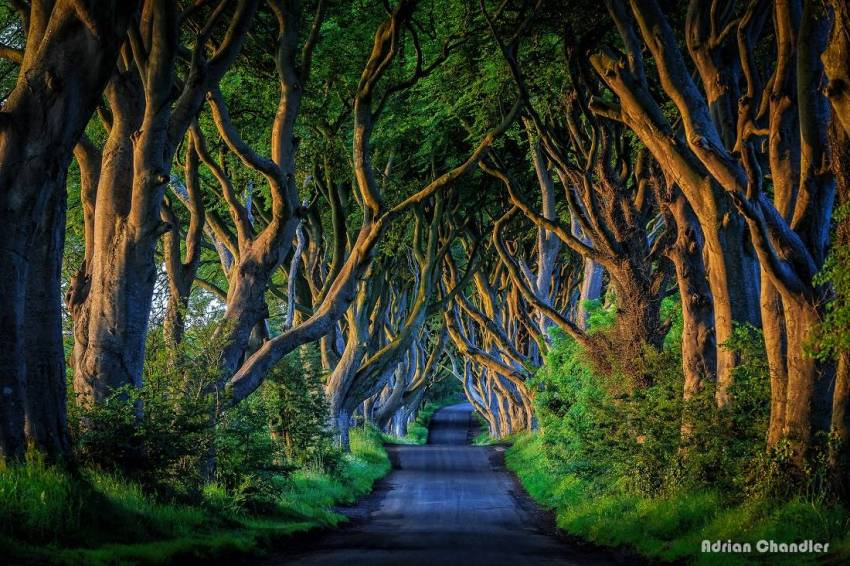 The Dark Hedges, Ballymoney, Northern Ireland