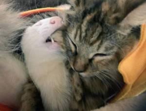 rescue-kitten-komari-ferret-brothers-21