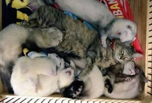rescue-kitten-komari-ferret-brothers-49