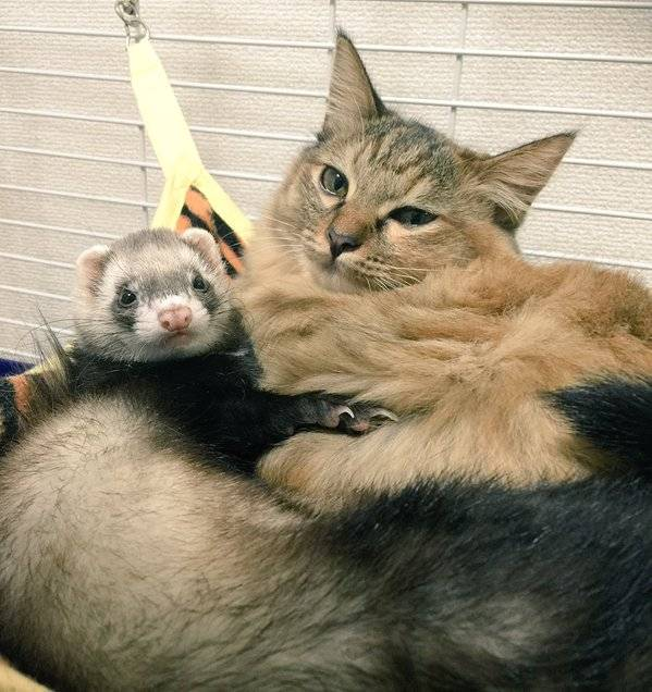 rescue-kitten-komari-ferret-brothers-5