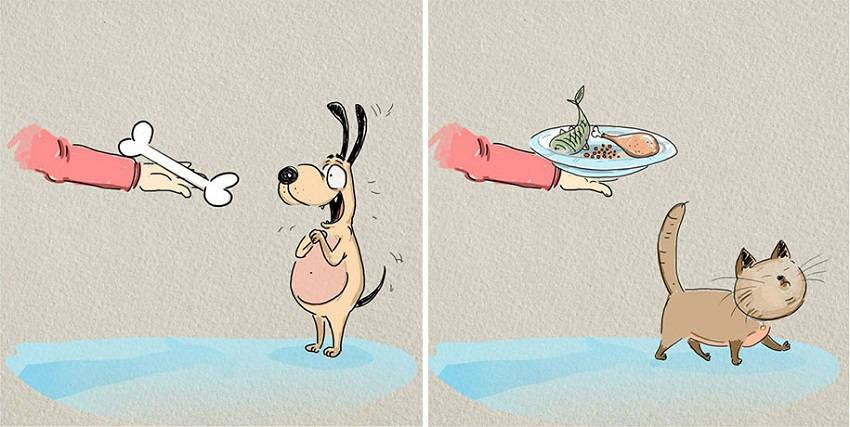 animals-pets-differences-cat-vs-dog-bird-born-5