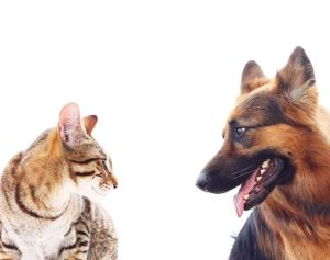 Cats or Dogs Scientists Answer