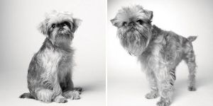 dogs-getting-older_1-BRISCOE — 1 YEAR AND 10 YEARS