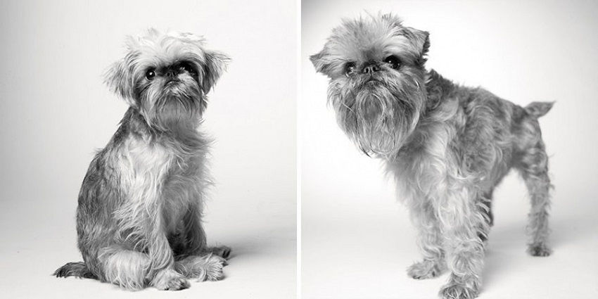 dogs-getting-older_1