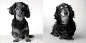 dogs-getting-older_11-LILY — 8 MONTHS AND 15 YEARS