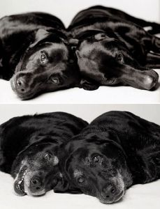 dogs-getting-older_12-MADDIE AND ELLIE — 7 AND 6 YEARS; 14 AND 13 YEARS