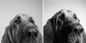 dogs-getting-older_4-COOPER — 3 YEARS AND 10 YEARS