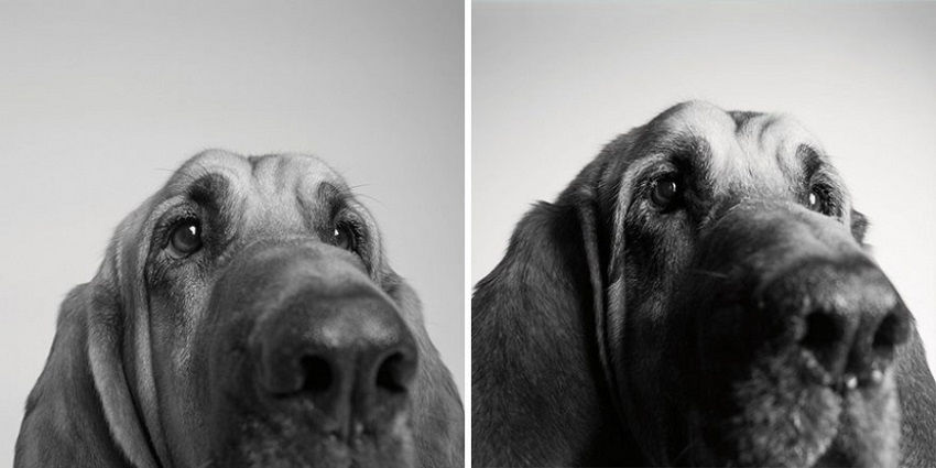 dogs-getting-older_4