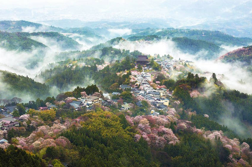 Land of mist - spring-japan-cherry-blossoms-national-geographics