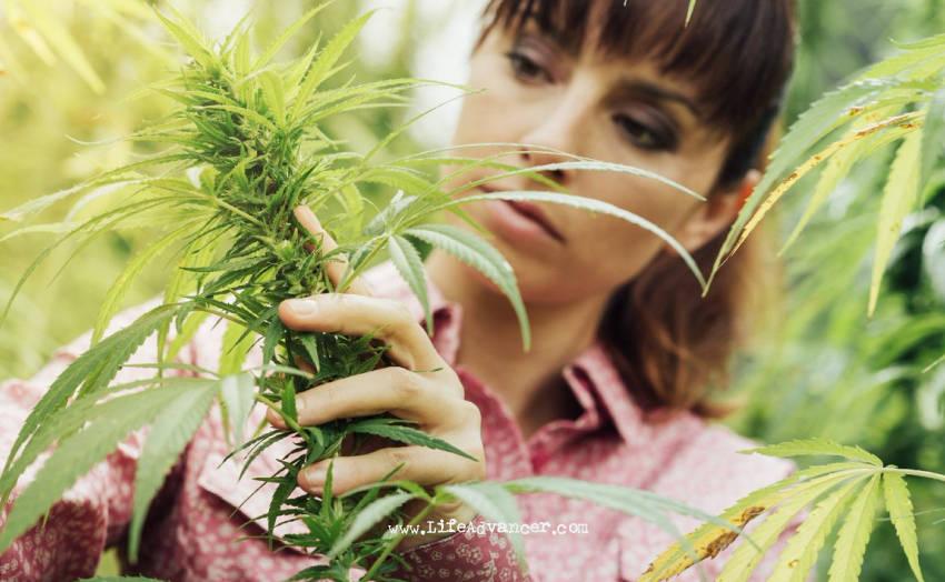 Eating Raw Weed Good
