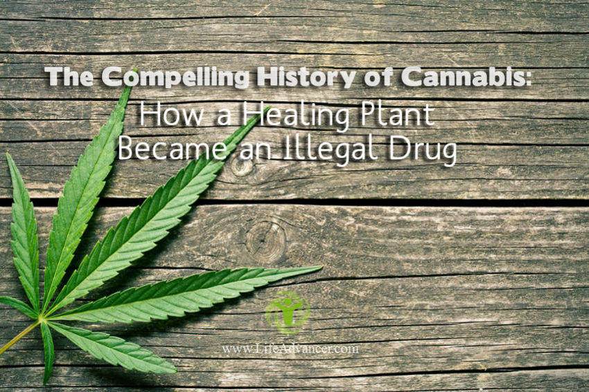 History of Cannabis Healing Plant Illegal Drug