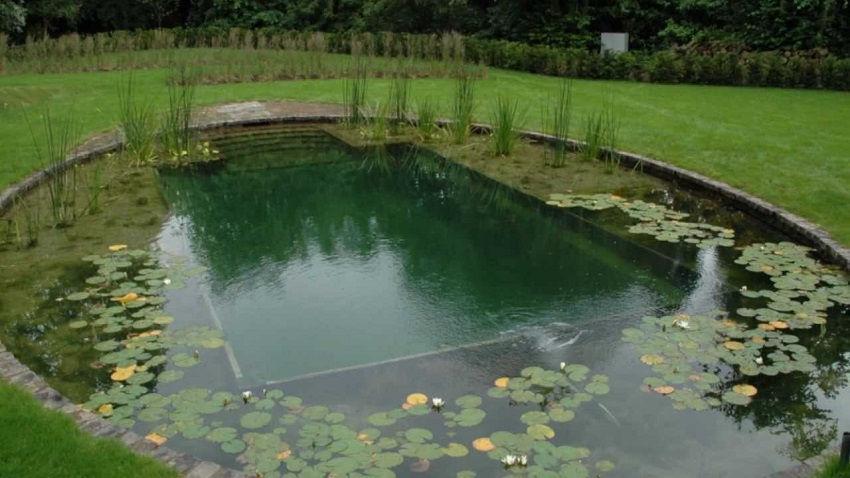 Build a Natural Pool