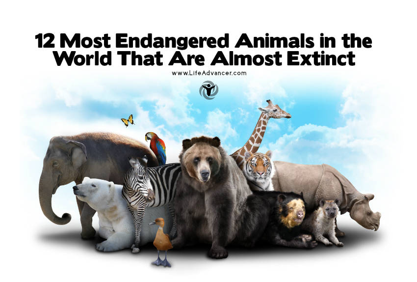most endangered animals