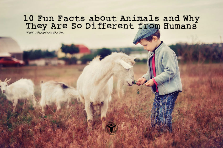 Fun Facts about Animals