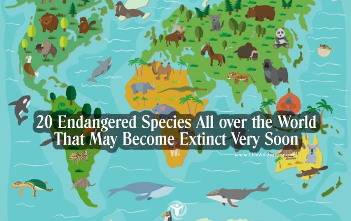 Endangered Species All over the World