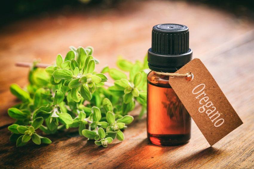 Oregano Oil Uses and Health Benefits