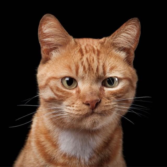 Sceptical Tabby