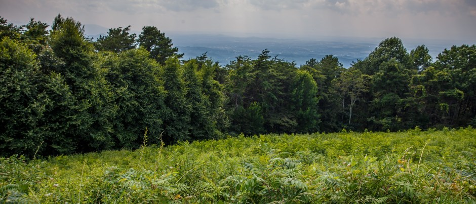 Calf Mountain Overlook