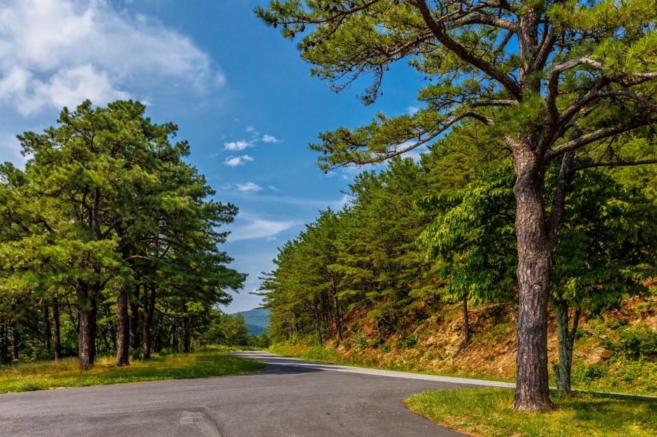 Sawmill Ridge Overlook