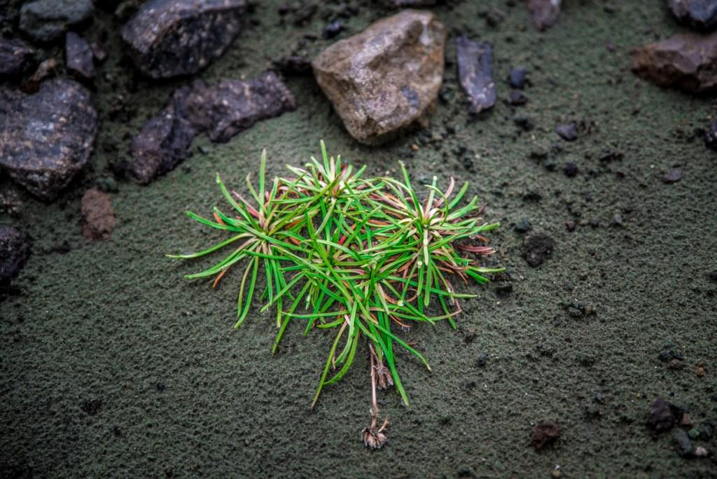 Vegetation on Bláhnjúkur