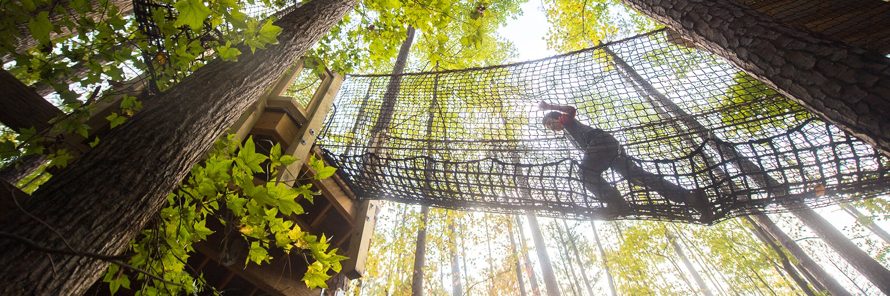A boy climbs a rope bridge connecting two treehouses.