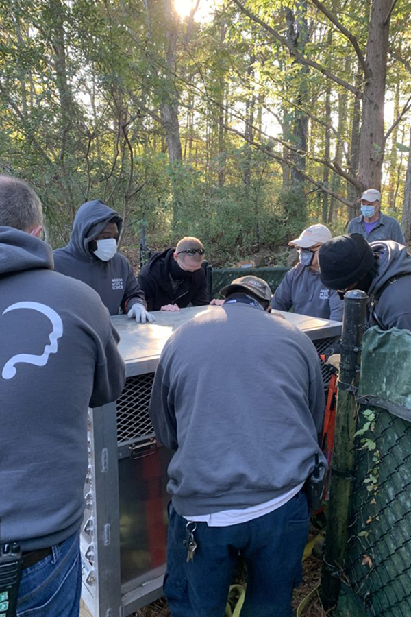 Group of staff move crate with bear inside
