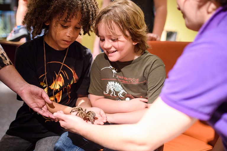 Two boys hold out their hands to hold a tarantula and examine it.