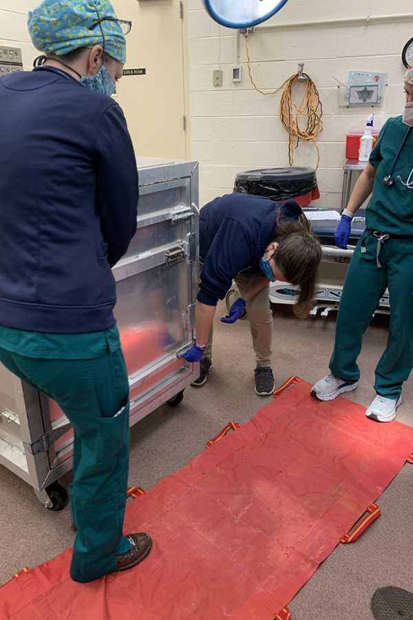 Vets stand on red mat near bear crate