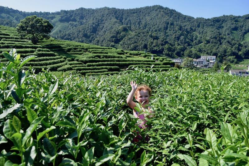 Longing Tea Plantation