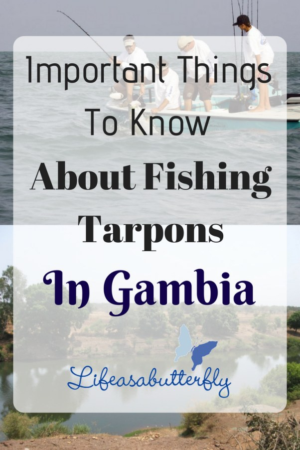 Important Things To Know About Fishing Tarpons In Gambia