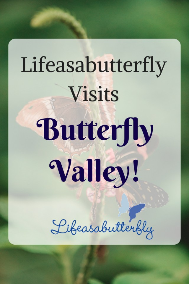 Lifeasabutterfly visits Butterfly Valley!