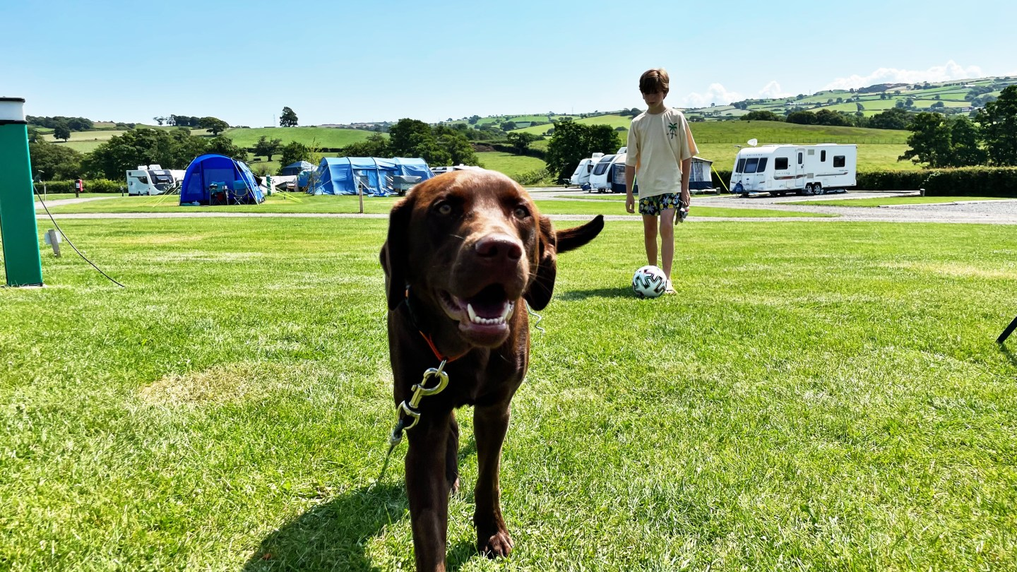 What to pack for a camping adventure with your dog