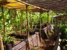 Zopilote - Ometepe, Nicaragua