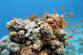 Dahab Diving, Red Sea, Egypt