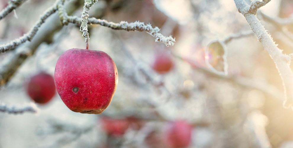 winter garden love