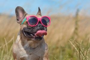 safe pet summer