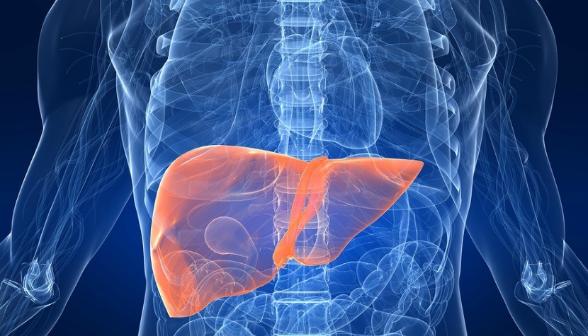 3d rendered anatomy illustration of a human body shape with highlighted liver