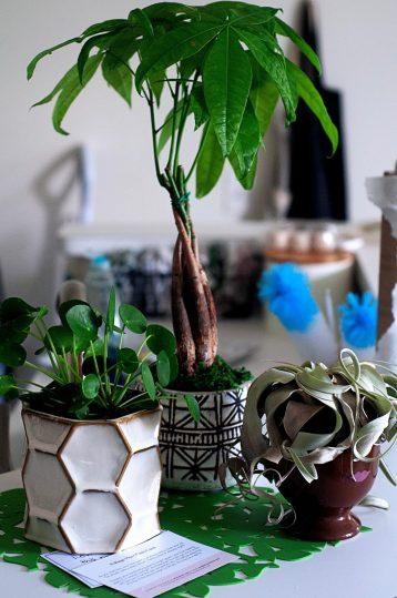 Easy Care Plants