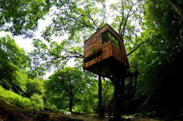 Amazing Tree House Designs and Ideas