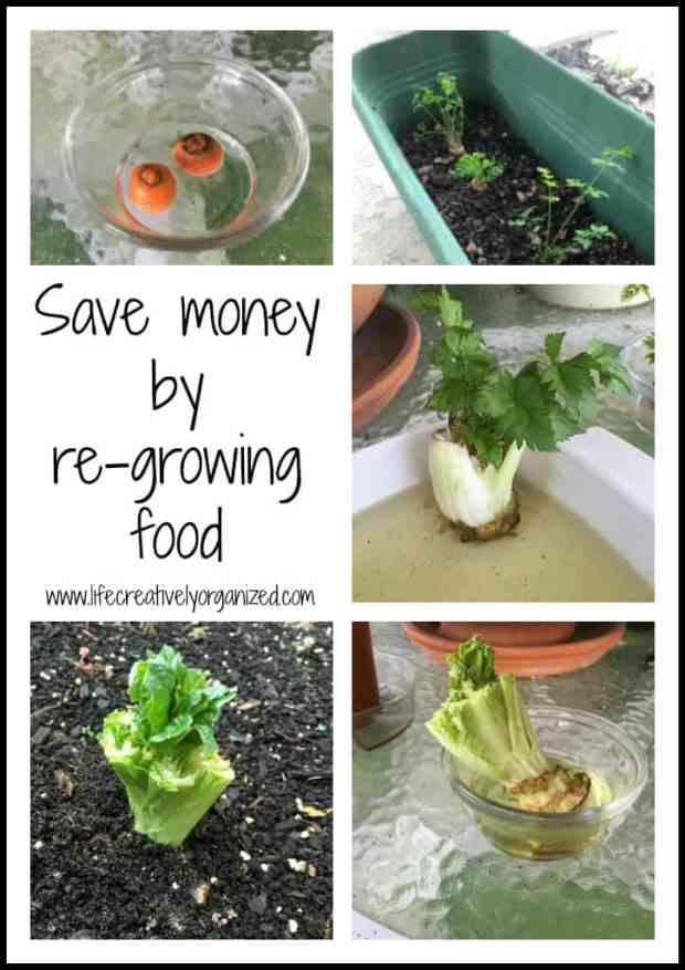 Produce has become so expensive! Here is how to save money by re-growing food to save money and always have fresh produce on hand!